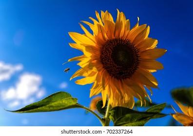 Sunbeam in the summer