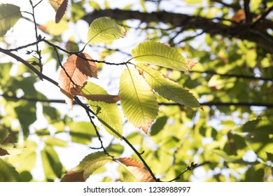 Sunbeam through  detailed leaves during autumn composition