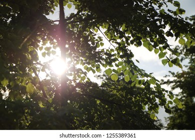 Sunbeam through tree crown. Branches and leaves of a tree in a sunbeam against a blue sky, background