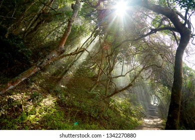 Sunbeams in african jungle, tsitsikama south africa