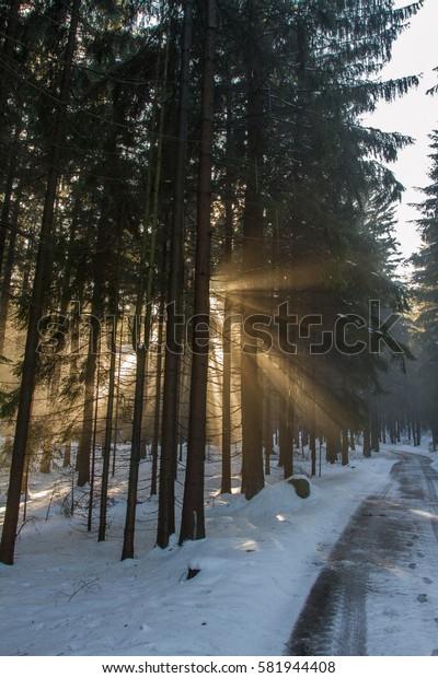 Sunbeams between trees.