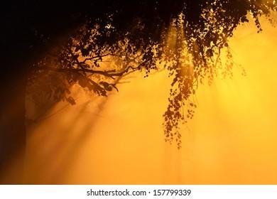 Sunbeams breaking through morning fog and tree