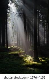 Sunbeams in a dark forest