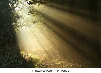 Sunbeams falling on the path in autumn forest on a foggy morning.