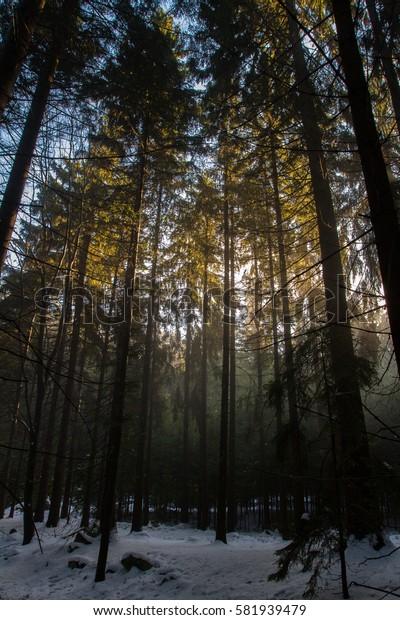 Sunbeams and fog between trees.