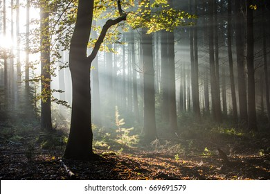 Sunbeams in a foggy forest in fall