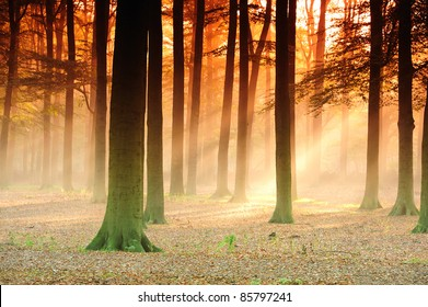 Sunbeams in the  forest in the early morning.