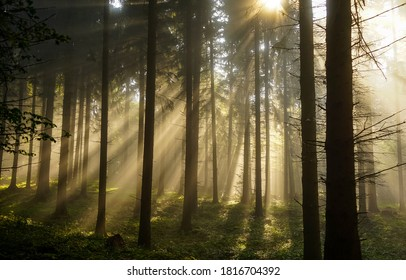 Sunbeams forest trees. Forest sunbeams. Sunbeams forest through tree branches. Forest sunbeams