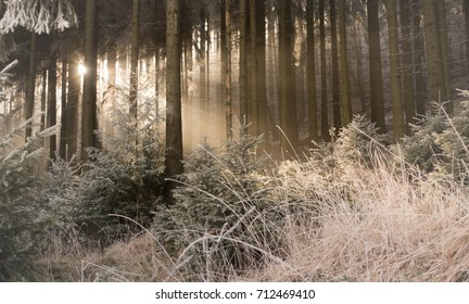 Sunbeams in Frozen Forest with Ice-covered Trees and Grass, The