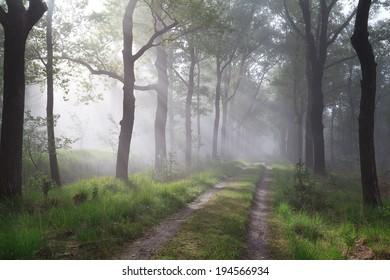 sunbeams in misty green forest