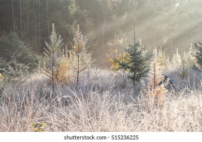 sunbeams over frosty meadow in autumn forest