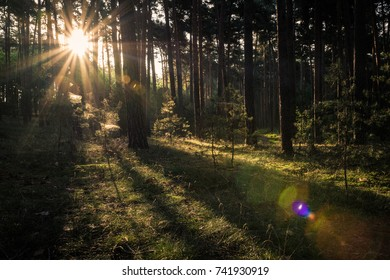 Sunbeams shining into a forest in autumn, Harz Mountains in Germany
