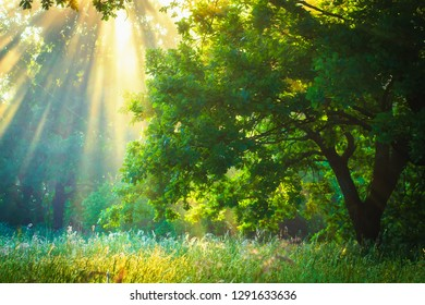 Sunbeams in spring green garden. Sun rays through branches trees. Spring nature landscape