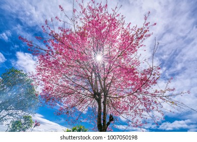 Sunbeams through cherry blossoming apricot trees on a beautiful spring morning. Nature is interesting when we know how to view them with a photographic perspective