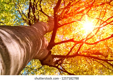 Sunbeams through treetop