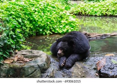 Sunbear at the park : Sun Bear