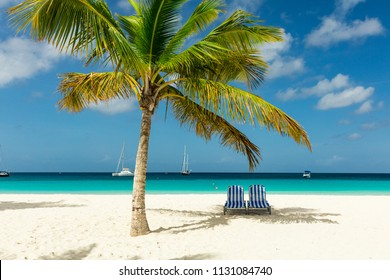 Sunbeds under a palm tree on exotic Barbados beach in the Carribean