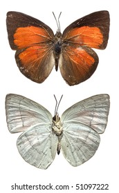 The Sunbin butterfly, upper and lower