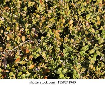 A sunburnt bush