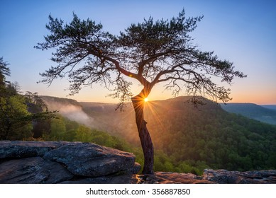 Sunburst behind the iconic pine tree at Buzzards Roost in Fall Creek Falls state Park in Tennessee.