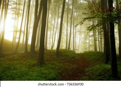 Sunburst rays through a foggy woods