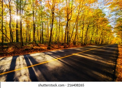 A sunburst shines through the colored trees casting long shadows across a rural road during the autumn season.