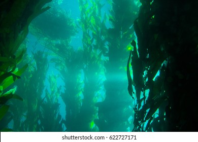 Sunburst Shining through a Kelp Forest Underwater