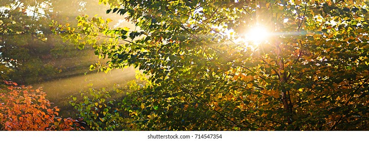 Sunburst through the forest on a bright autumn day in New England Banner