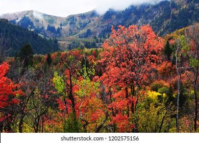Sundance mountain resort in fall. Fall, autumn background.