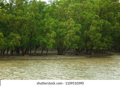 The Sundarbans, Bangladesh, September 11, 2016. A landscape view of the tropical mangrove forest at coastal, famous for the Royal Bengal Tiger and UNESCO World Heritage site in Bangladesh.