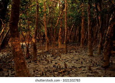 The Sundarbans, Khulna, Bangladesh 2016. A view of The Sundarbans , the largest mangrove forest in the coastal region of the Bay of Bengal and considered one of the natural wonders of the world.