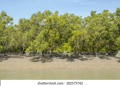 The Sundarbans is the largest mangrove forest in the world.