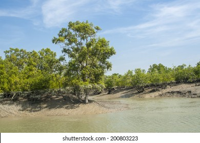 The Sundarbans is the largest mangrove forest in the world