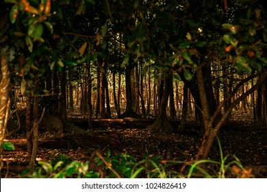 The Sundarbans, September 10, 2016. A view of deep forest of the Sundarbans mangrove forest, one of the largest such forests in the world.