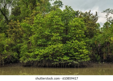The Sundarbans, September 10, 2016. A view of the Sundarbans mangrove forest, one of the largest such forests in the world.