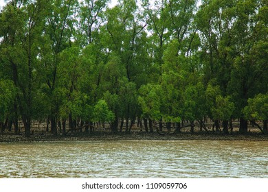 The Sundarbans, September 11, 2016. A landscape view of the largest tropical mangrove forest at coastal, famous for the Royal Bengal Tiger and UNESCO World Heritage site in Bangladesh.