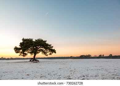 Sundown on the snowy (Lange) Soesterduinen in Soesterberg.