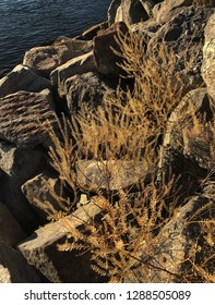 Sun-dried boulders and delicate spindly vegetation, on a hot summer's day in Australia; taken on the banks of the mighty Clarence River, at Goodwood Island Wharf, NSW, Australia.