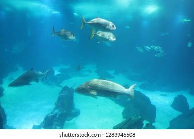 Sunfish Swimming in Lisbon
