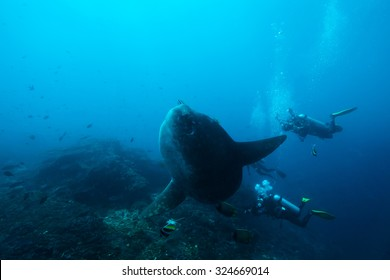 sunfish under the sea