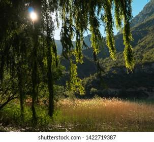 Sunflares through vegetation, lake and mountains