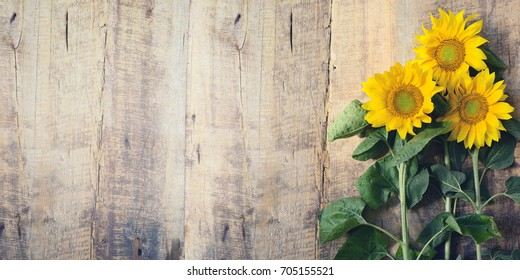 Sunflower against the background of an old board