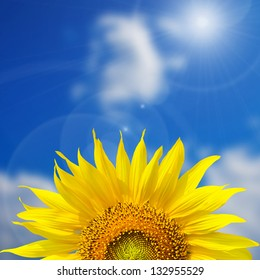 Sunflower background with blue sky