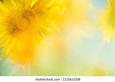 Sunflower background,copyspace for your text.