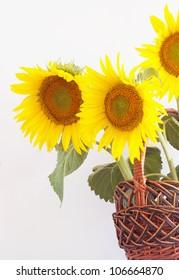 Sunflower in the basket.
