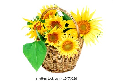 Sunflower in the basket