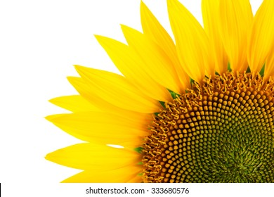 Sunflower detail, isolated on white background