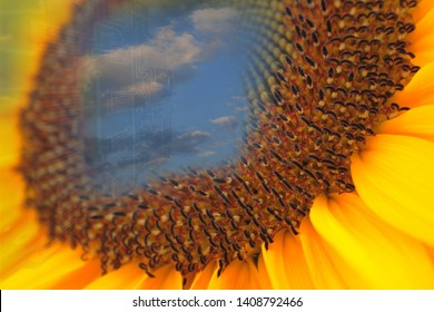 sunflower energy concept as ecological footprint for the future