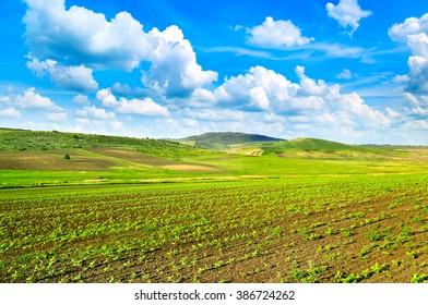 sunflower field and beautiful sky