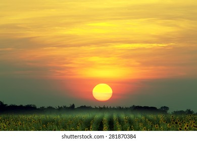 Sunflower field and big sunset, nature background